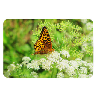 Black and Orange Butterfly White Flowers Magnet