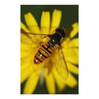 Black and orange hover fly stationery