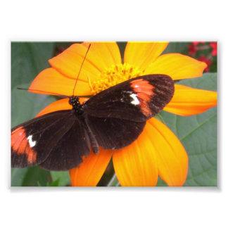 black and orange photo print