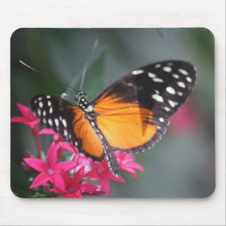 Black and Orange Spotted Butterfly 2 mousepad