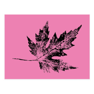 """""""Black and Pink Maple"""" Country Roads Postcard"""