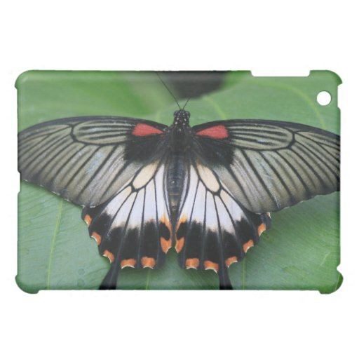 Black and Pink Swallowtail Butterfly Case iPad Mini Covers