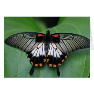 Black and Pink Swallowtail Butterfly Greeting Card