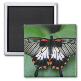 Black and Pink Swallowtail Butterfly Magnet Fridge Magnet