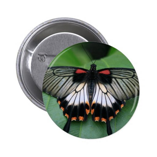 Black and Pink Swallowtail Butterfly Pin