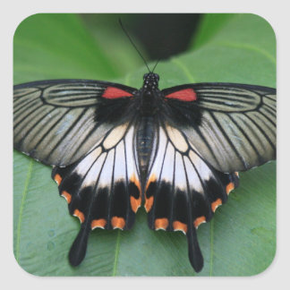 Black and Pink Swallowtail Butterfly Sticker