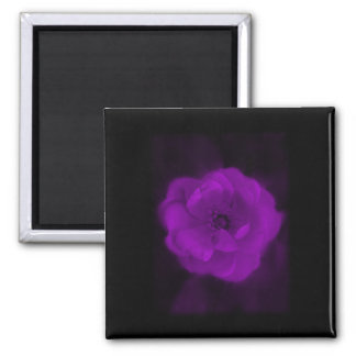 Black and Purple Rose. 2 Inch Square Magnet