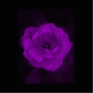 Black and Purple Rose. Photo Sculpture Magnet