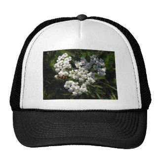 Black and Red Bug on White Flower Hats