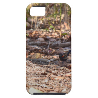 BLACK AND RED FINCH IN RURAL QUEENSLAND AUSTRALIA iPhone SE/5/5s CASE
