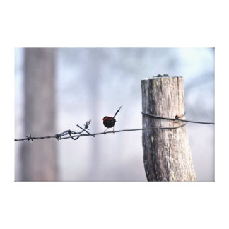 BLACK AND RED FINCH RURAL QUEENSLAND AUSTRALIA CANVAS PRINT