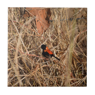 BLACK AND RED FINCH RURAL QUEENSLAND AUSTRALIA TILE