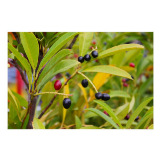 Black and red fruits posters