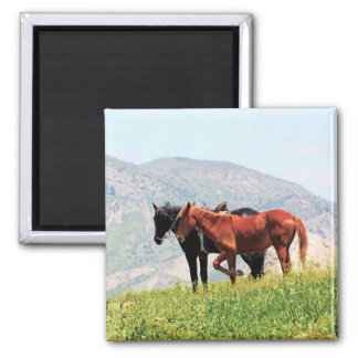 Black and red horses in the mountai magnets