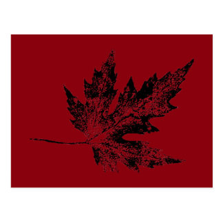 """""""Black and Red Maple"""" Country Roads Postcard"""