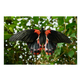 Black and Red Moth Print