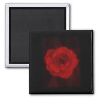 Black and Red Rose. 2 Inch Square Magnet