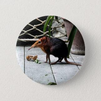 Black and Rufous Elephant Shrew Button