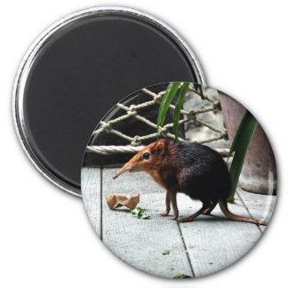 Black and Rufous Elephant Shrew Refrigerator Magnets