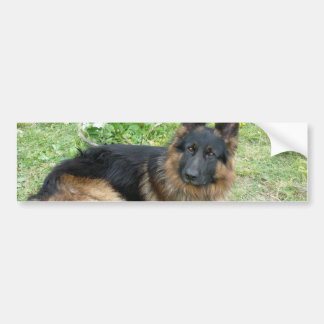 Black and Tan Alsatian Bumper Sticker