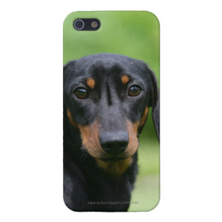 Black and Tan Miniture Dachshund 1 Case For iPhone SE/5/5s