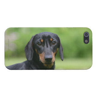 Black and Tan Miniture Dachshund 1 Cover For iPhone SE/5/5s