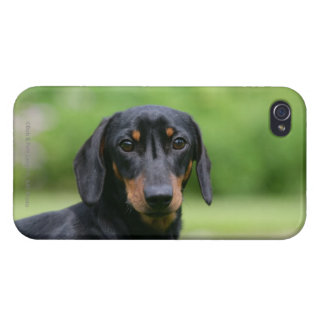 Black and Tan Miniture Dachshund 1 iPhone 4 Case