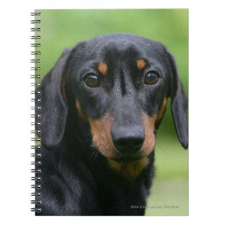 Black and Tan Miniture Dachshund 1 Notebook