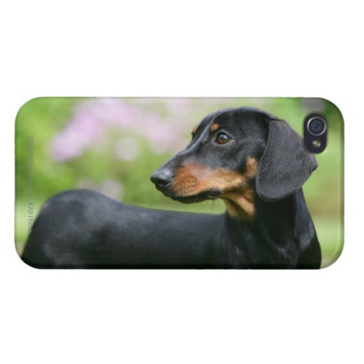Black and Tan Miniture Dachshund 2 Cover For iPhone 4