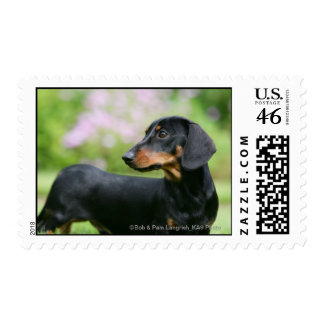 Black and Tan Miniture Dachshund 2 Postage