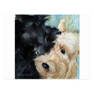 Black and wheaten Scottish terrier scottie art Postcard