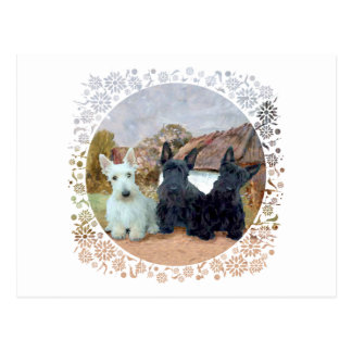 Black and Wheaten Scottish Terriers Postcard