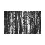 Black and White Abstract Birch Forest Canvas Print