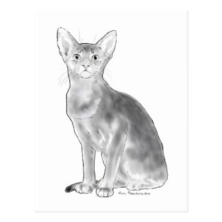 Black and White Abyssinian Postcard