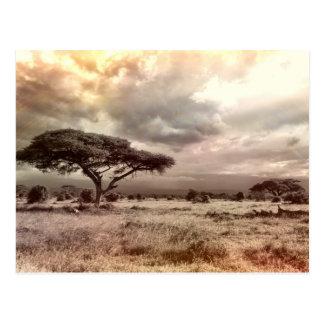 Black and White Acacia on the African Savanna Postcard