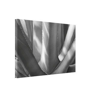 Black and White Agave Plant Canvas Print