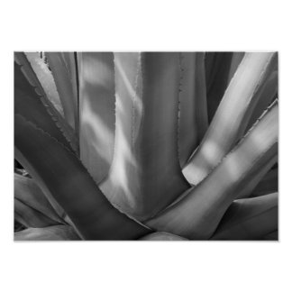 Black and White Agave Plant Poster
