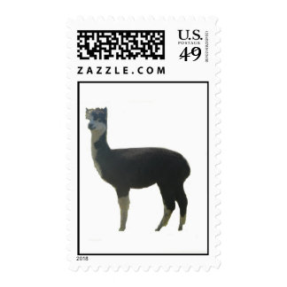 Black and white alpaca postage stamps