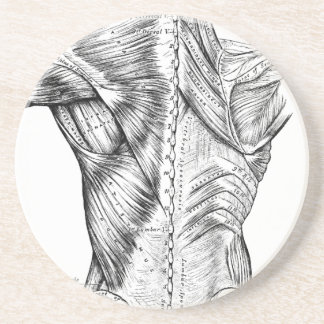 Black and White Anatomy Art Back Muscles (1890) Drink Coaster