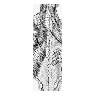 Black and White Anatomy Art Back Muscles (1890) Mini Business Card