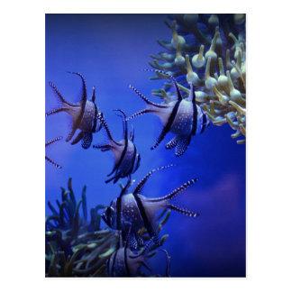 Black and White Angelfish in Deep Blue Sea Postcard