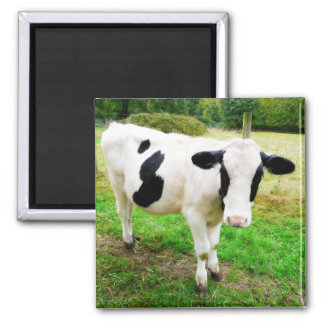 Black and White Apostrophe S Cow 2 Inch Square Magnet