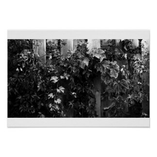 Black and White Autumn Leaves Poster