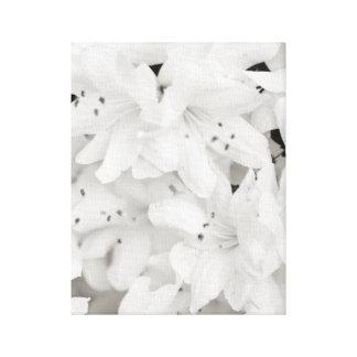 Black and White Azalea Flowers Canvas Print