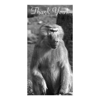 Black and White Babboon Card