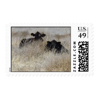 Black and White Baby Calves - Cow Calf Babies Postage
