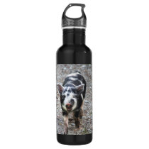 Black and White Baby Pig Stainless Steel Water Bottle