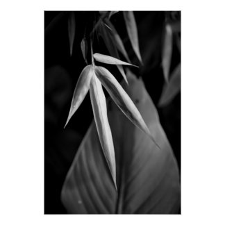 Black and White Bamboo with Tropical Foliage Print