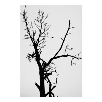 Black and White Bare Tree Poster