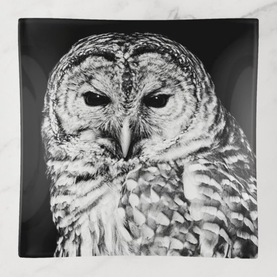 Black And White Barred Owl Face Bird Photo Trinket Trays Zazzlecom